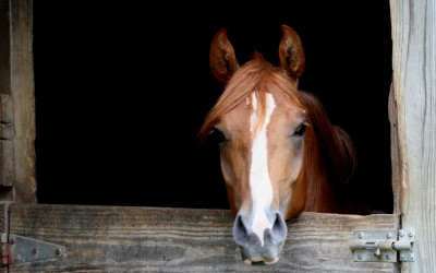 Equine Biosecurity Concerns Increase