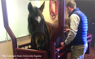 Polylast Floor at Colorado State University Equine Center