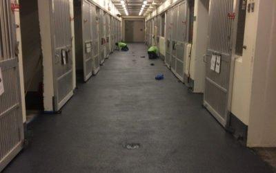 Ohio State University Veterinary Medical Center Polylast Flooring Installation