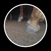 Horse Flooring