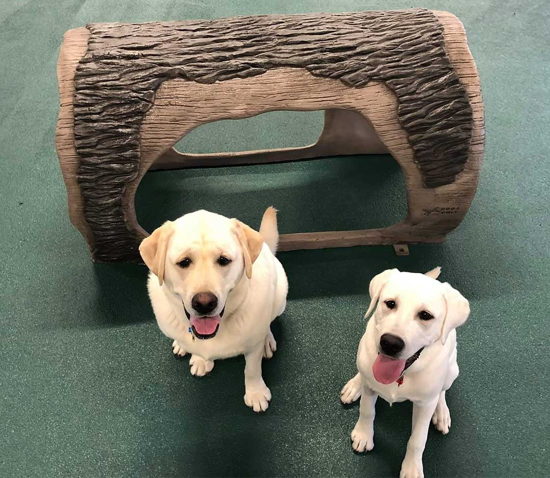 Dog Daycare with Polylast